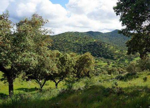 Plan de Ordenación de Montes en Extremadura: Beneficios para su finca