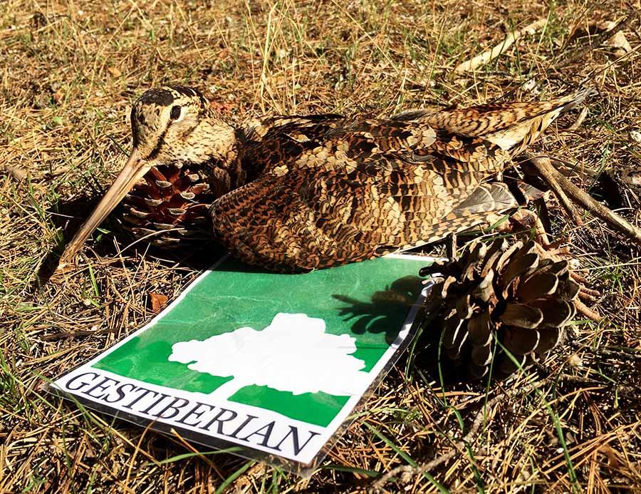 caza becadas cadiz gallinetas