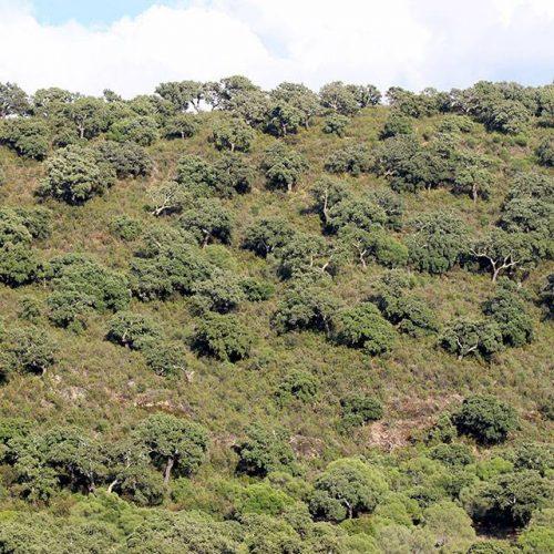 Ayudas Forestales 2019 en Andalucía