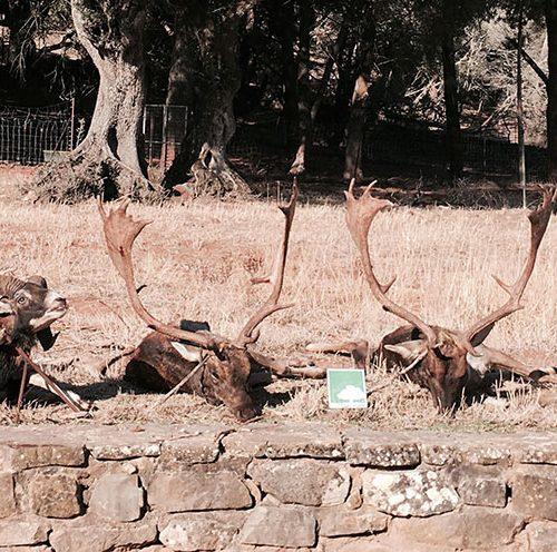 Abierto plazo para la comunicación de monterías, ganchos, batidas y ojeos en Andalucía