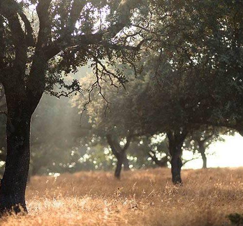 Subvenciones Forestales en Andalucía 2019: se publican las Bases Reguladoras