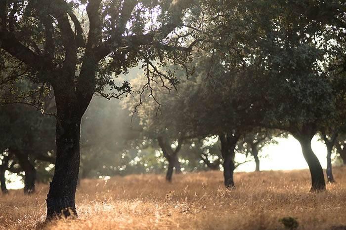 subvenciones forestales ayudas Andalucía 2019