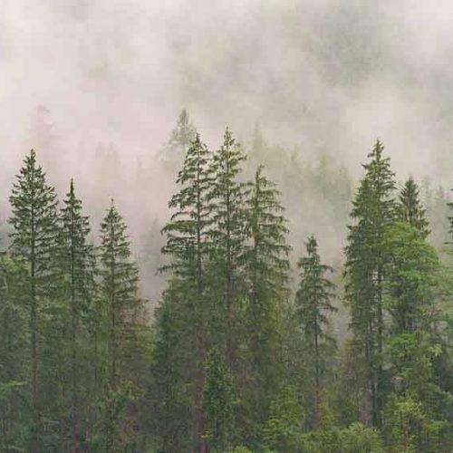 Cadena de Custodia de productos forestales. ¿Qué es?