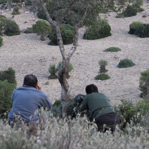 Andalusia hunting license: how can you get the hunting license to hunt in Andalusia?